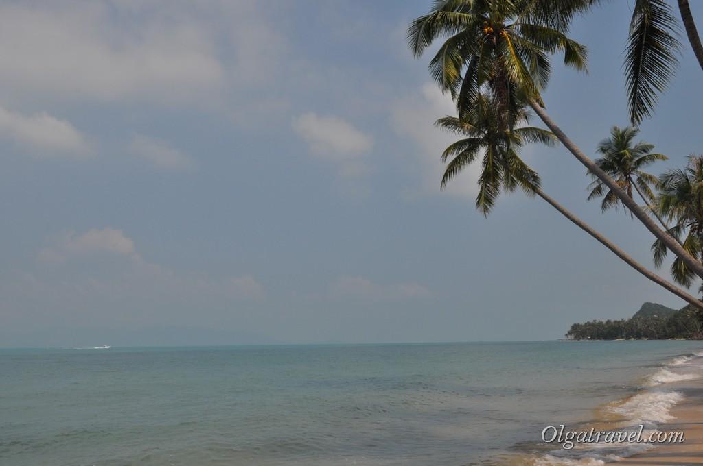 Красивейшие пальмы на пляже Банг По