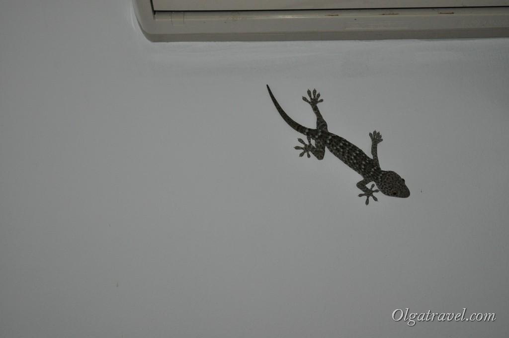 геккон Самуи