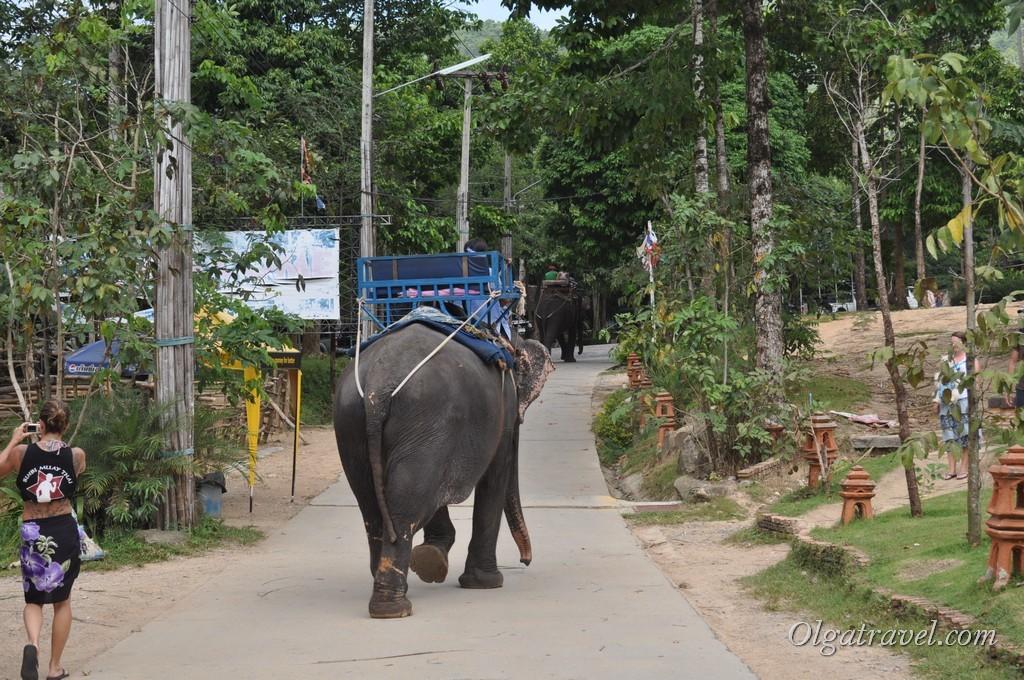 Возле водопада можно покататься на слонах