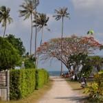 Пляж возле отеля Орхид ресорт (Orchid Resort) на Самуи