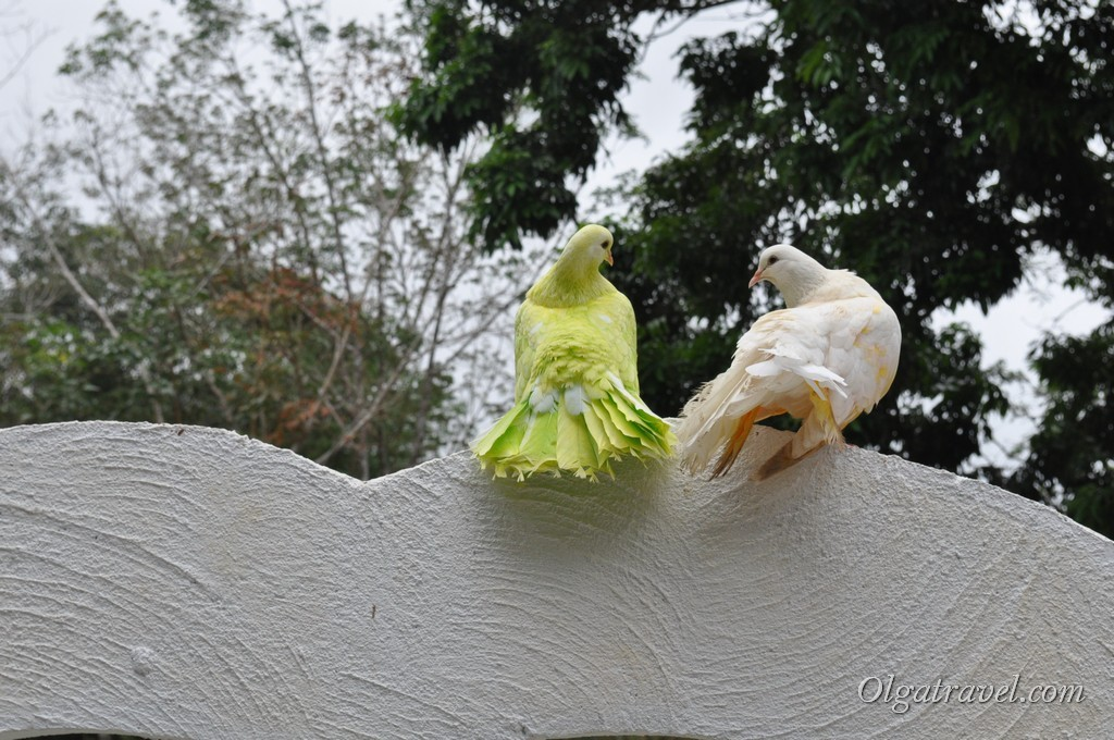 Два голубка