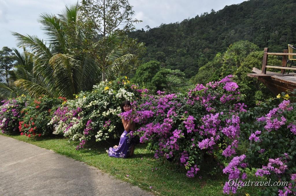 Paradise Park flowers