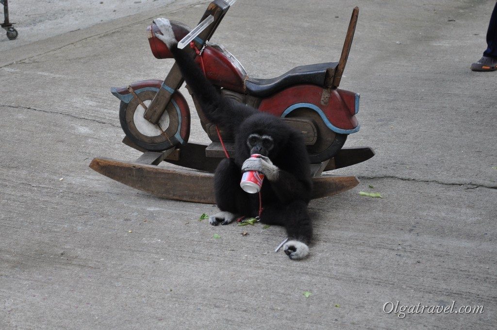 Веселая обезьянка Коля