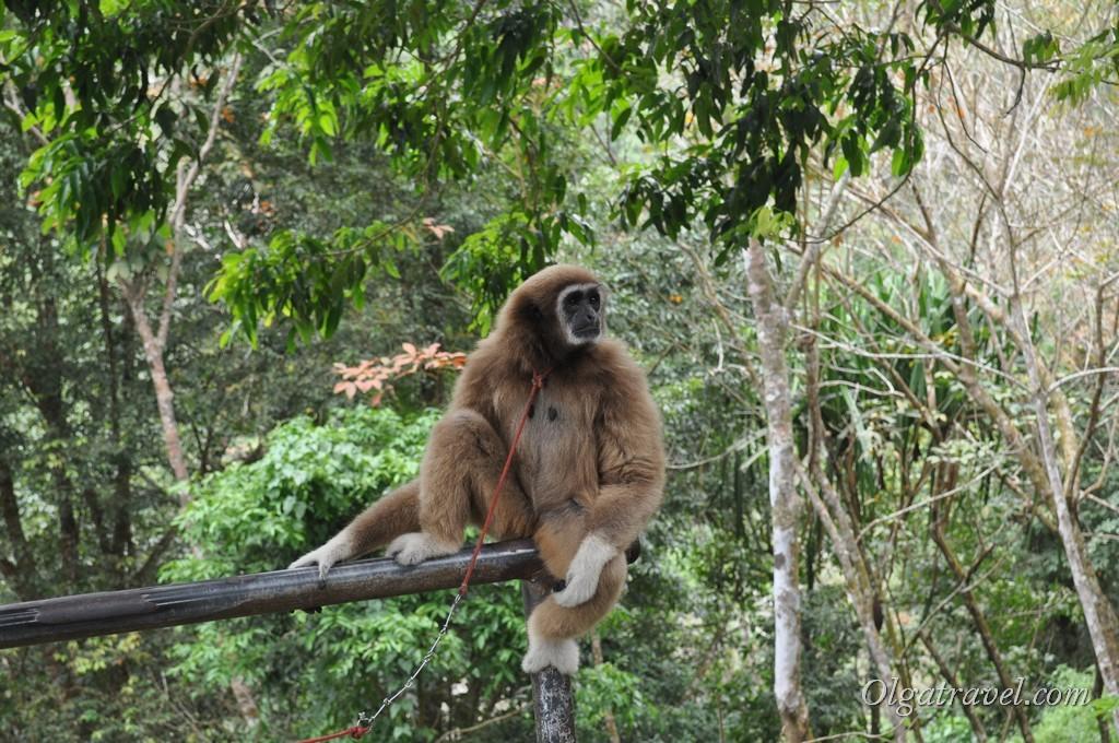 Paradise Park monkey