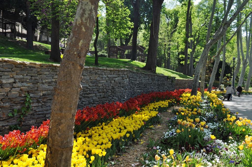 тюльпаны Стамбул