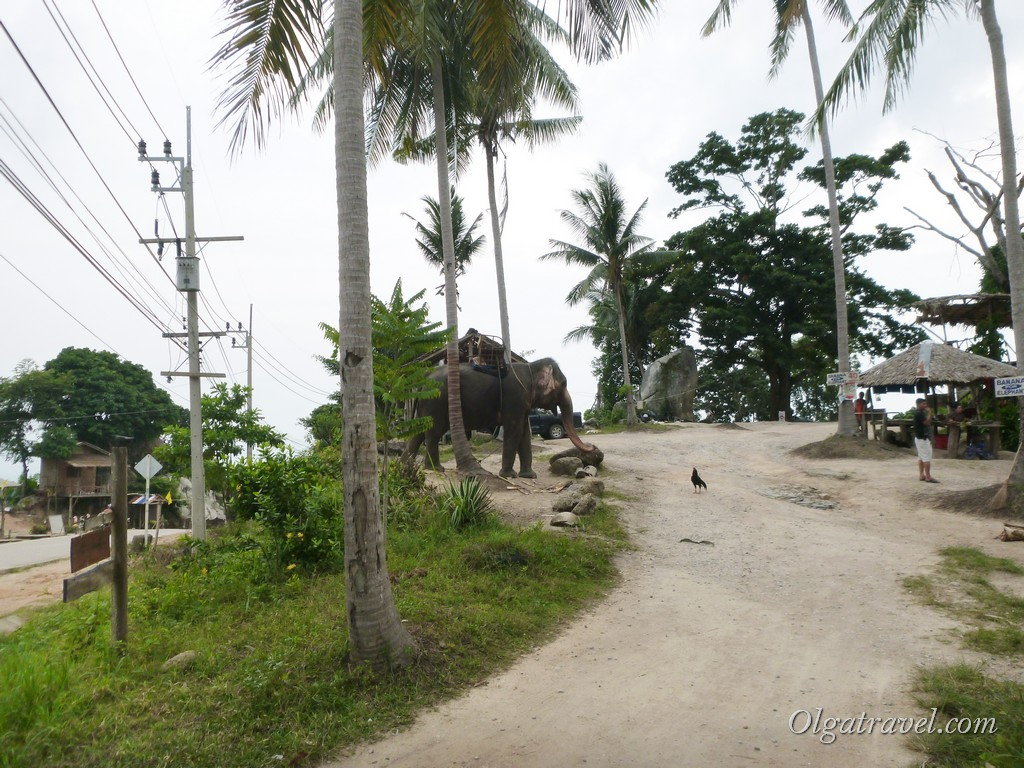 Слоники на Пангане