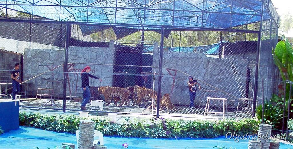 Шоу с тиграми
