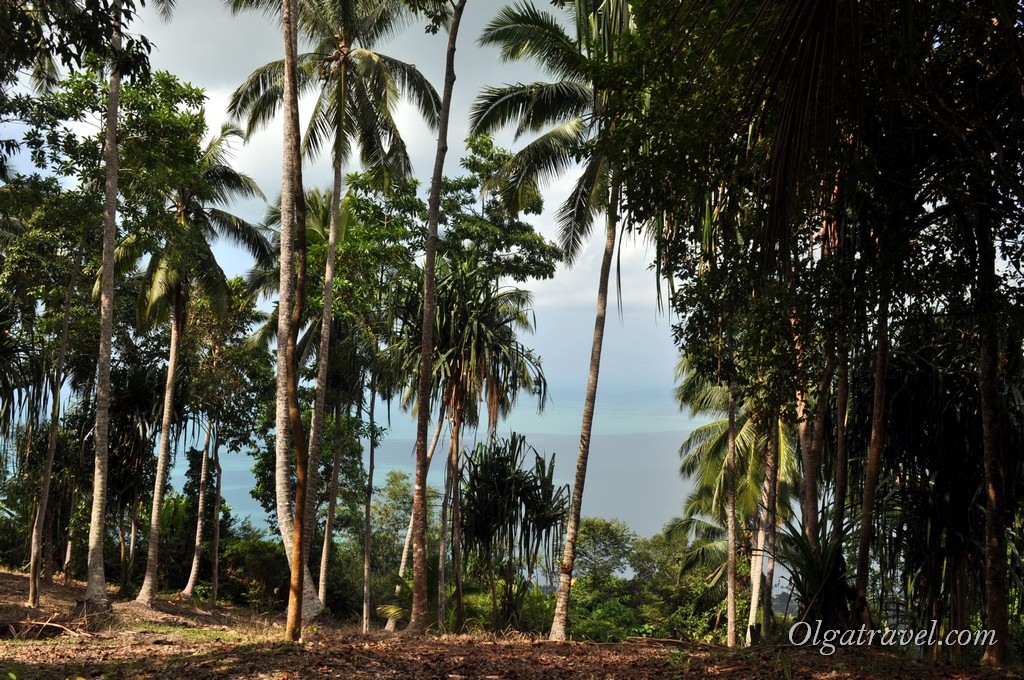 Viewpoint Bang Po 11