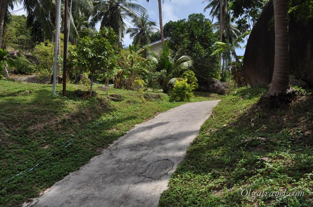Koh Tao road 3