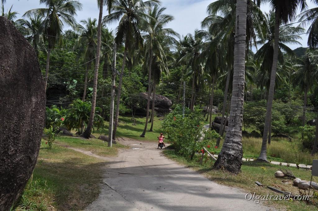 Koh Tao road 5