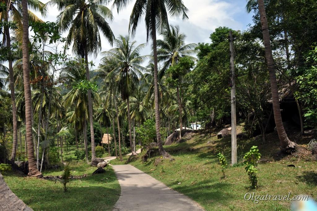 В джунглях Ко Тао:)