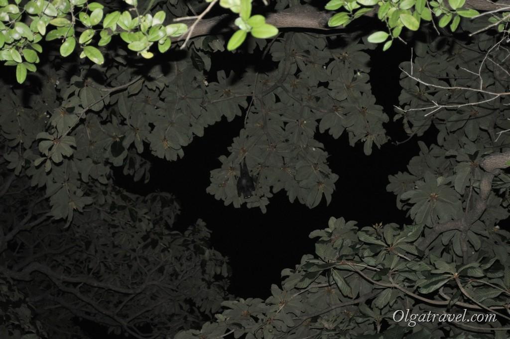 Вот то темное письмо на фото - летучая мышь. Их там было очень много