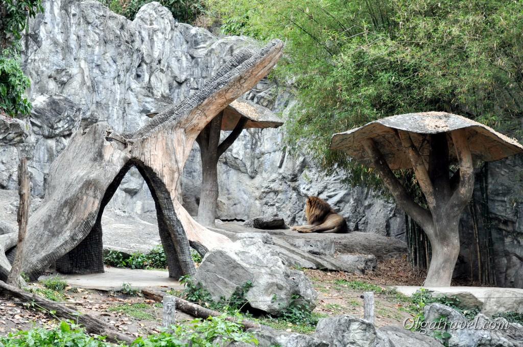 Chiangmai Zoo 11