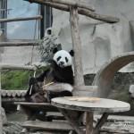 Зоопарк Чианг Май: милые панды и множество других животных