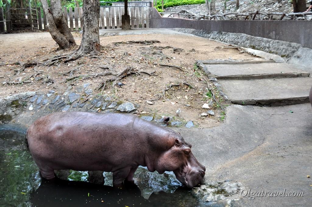 Chiangmai Zoo 3