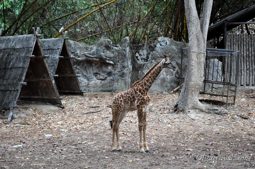 Маленький жирафчик