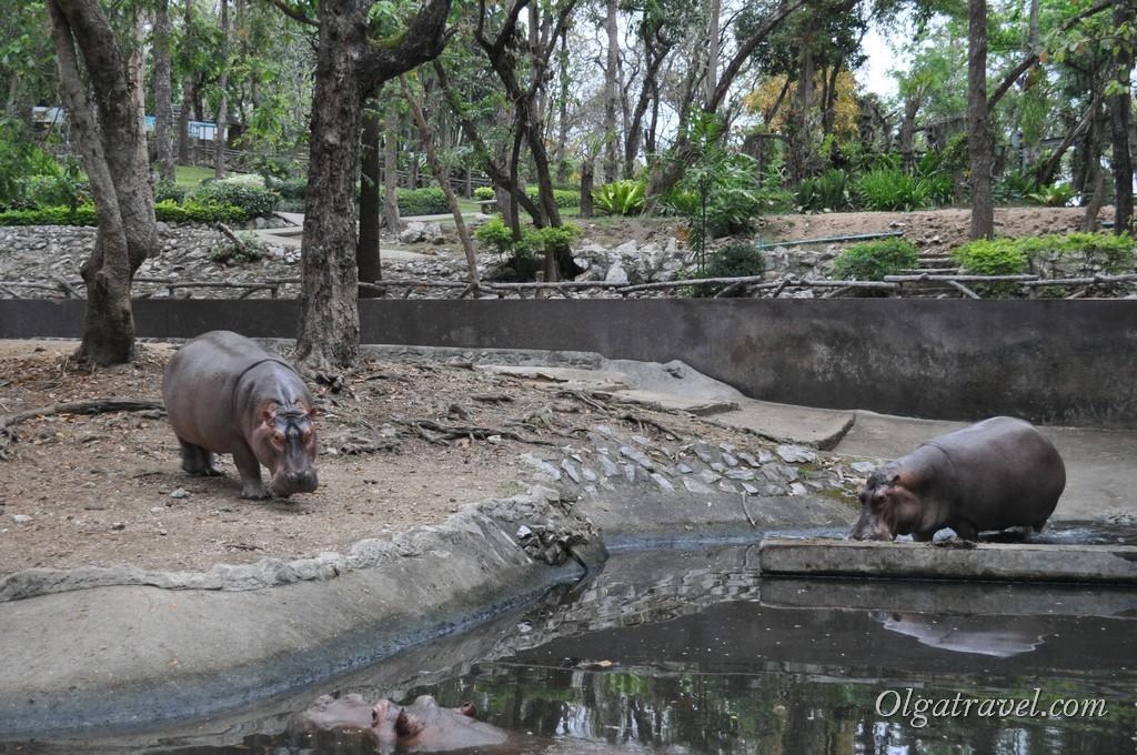 Chiangmai Zoo 45