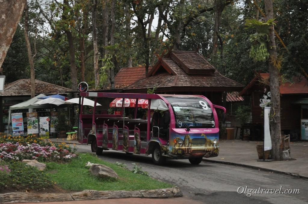 Передвигаться по зоопарку можно на таком автобусике за 20 бат