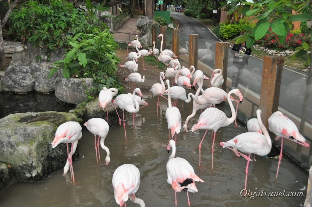 Chiangmai Zoo 49