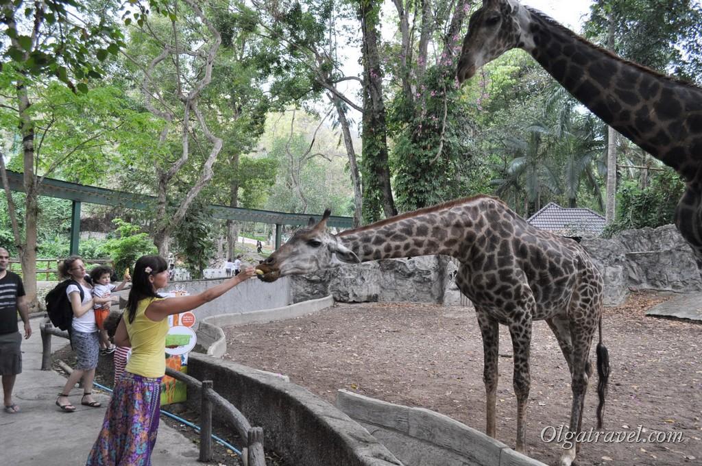 Chiangmai Zoo 6