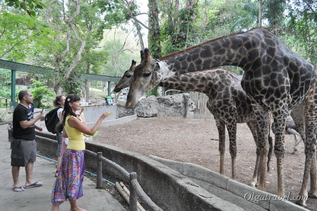 Chiangmai Zoo 7