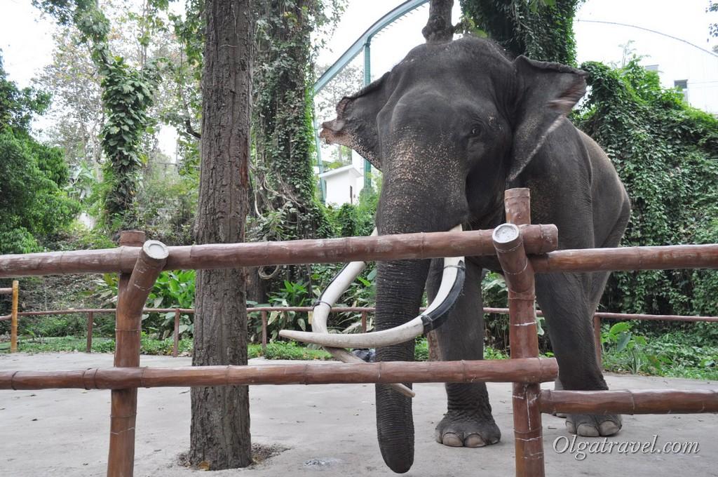 Chiangmai Zoo 8