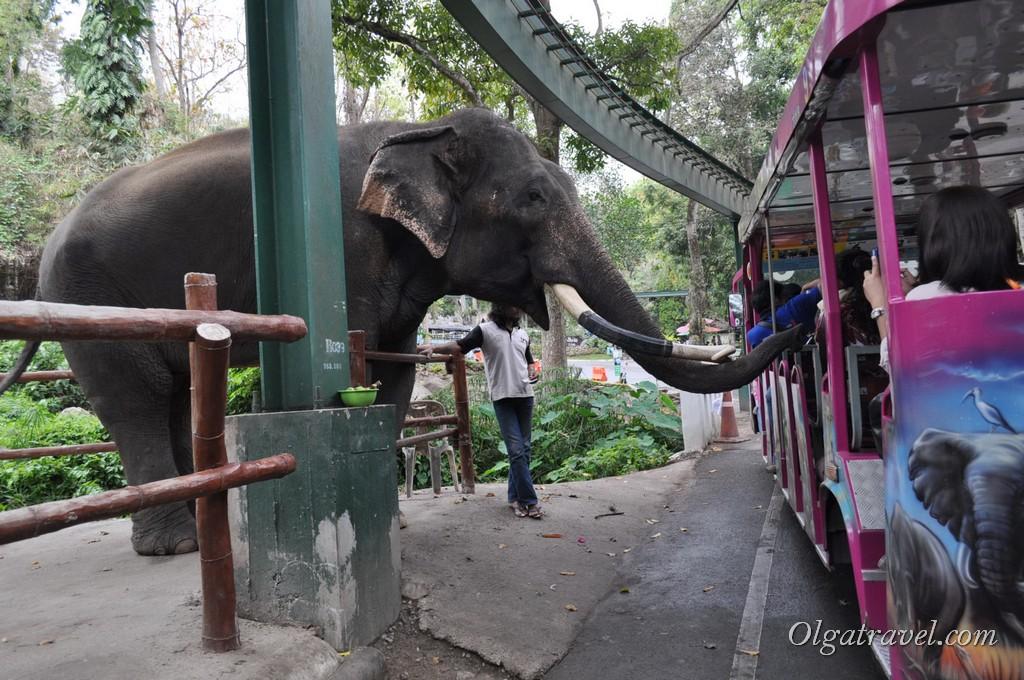 Chiangmai Zoo 9