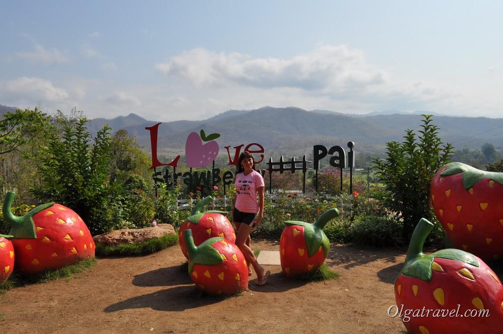 Плантации клубники возле Пая