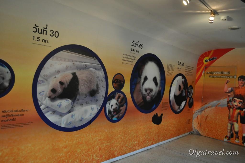 Chiangmai Zoo 16