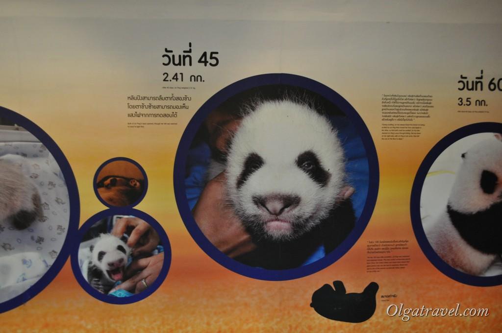 Chiangmai Zoo 17