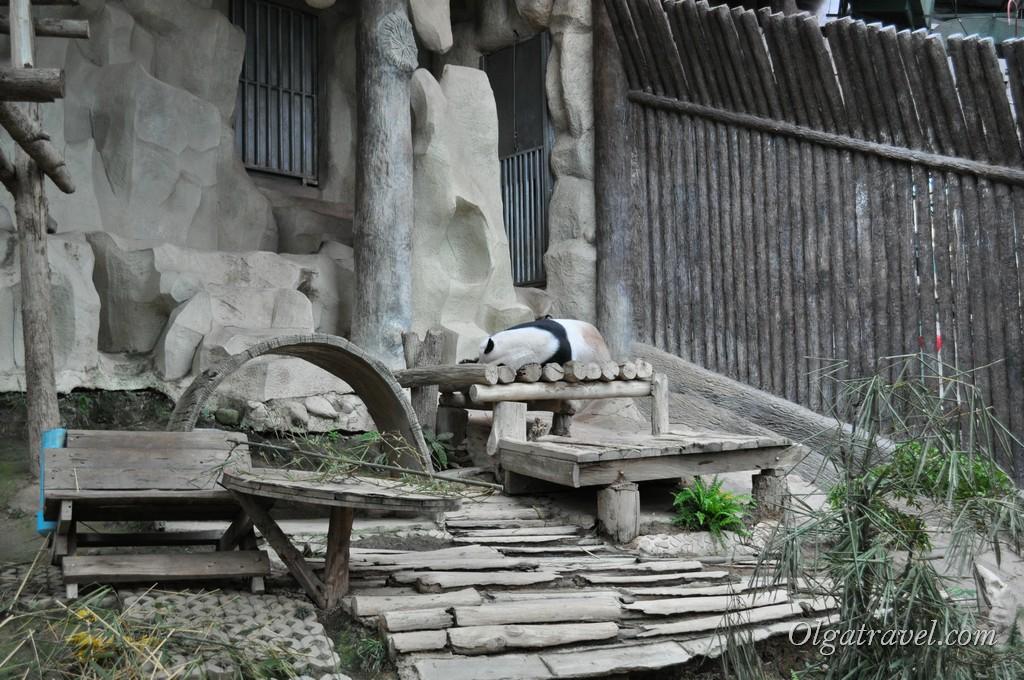 Панда спит:)