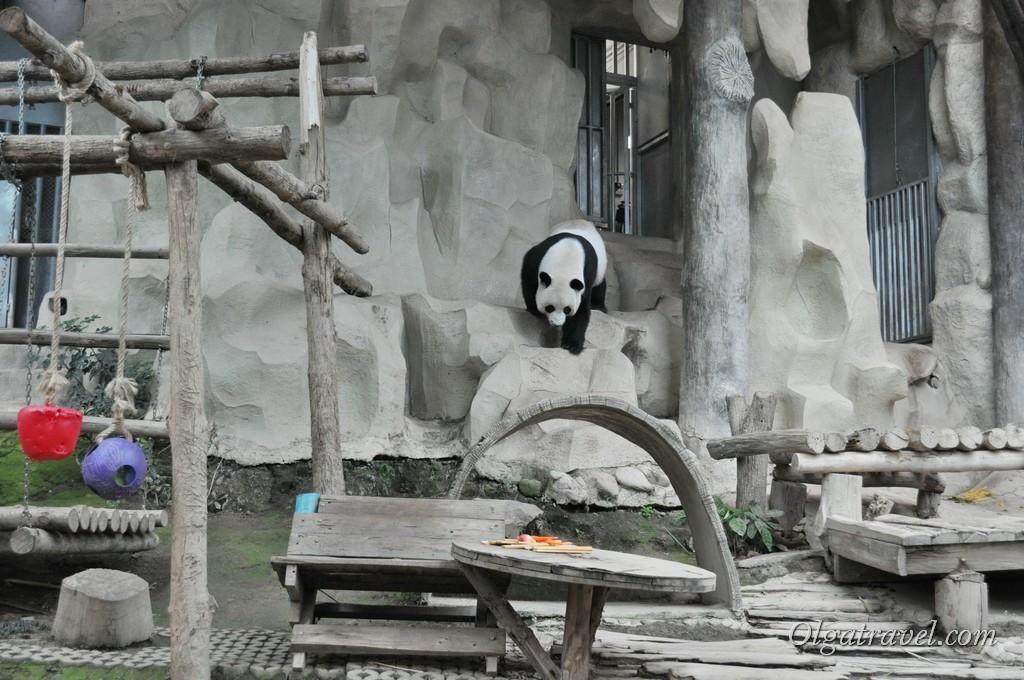 Панда идет кушать