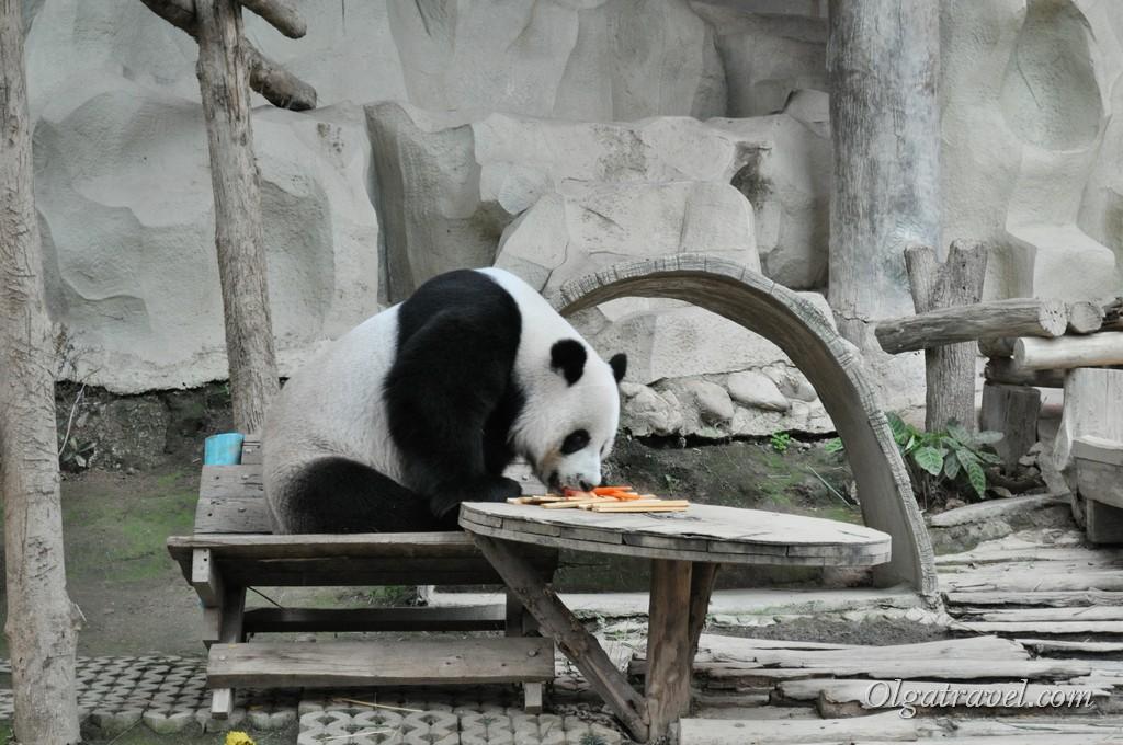Chiangmai Zoo 23