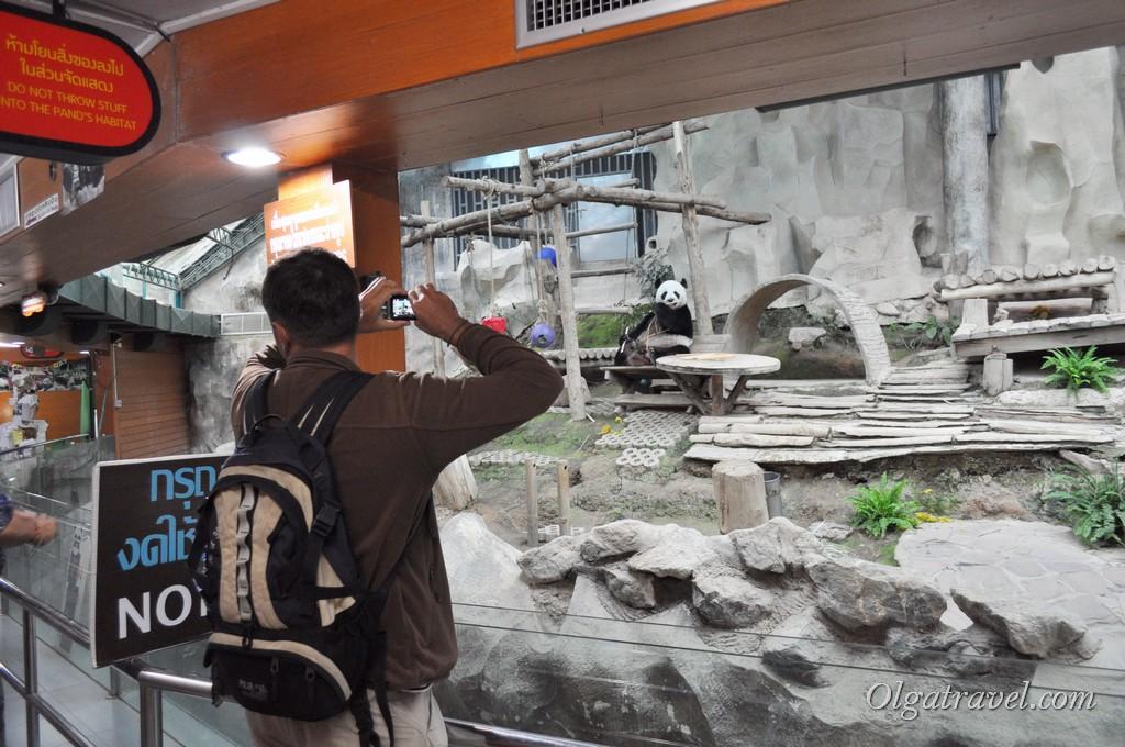 Chiangmai Zoo 26