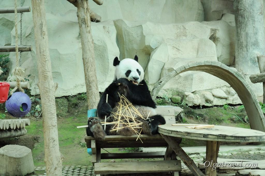 Chiangmai Zoo 27