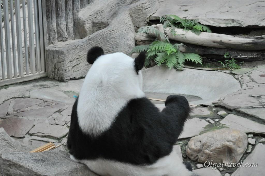 Chiangmai Zoo 28