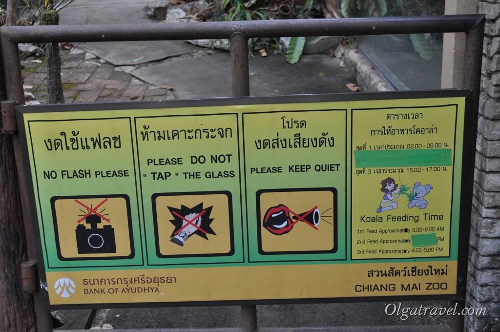 Chiangmai Zoo 31