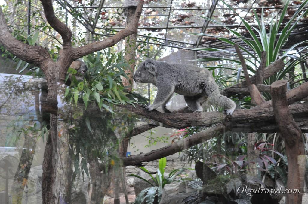 Chiangmai Zoo 32