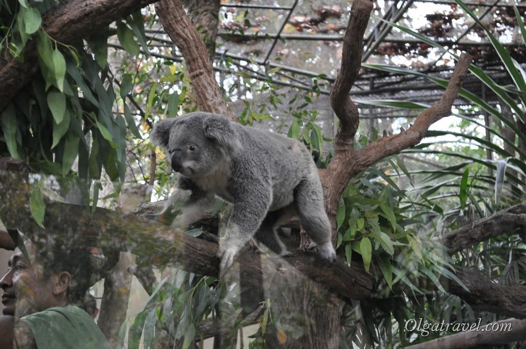 Chiangmai Zoo 33