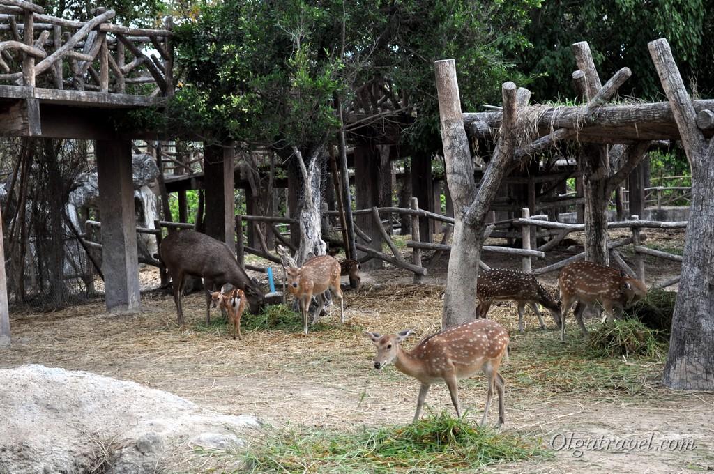 Chiangmai Zoo 35