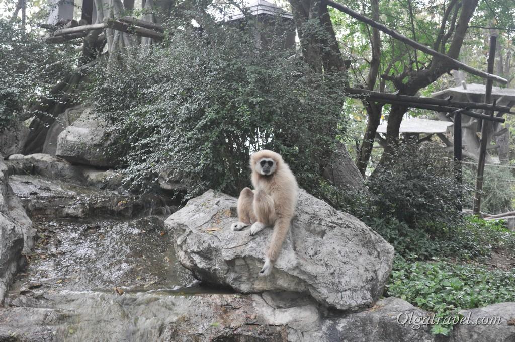Chiangmai Zoo 36