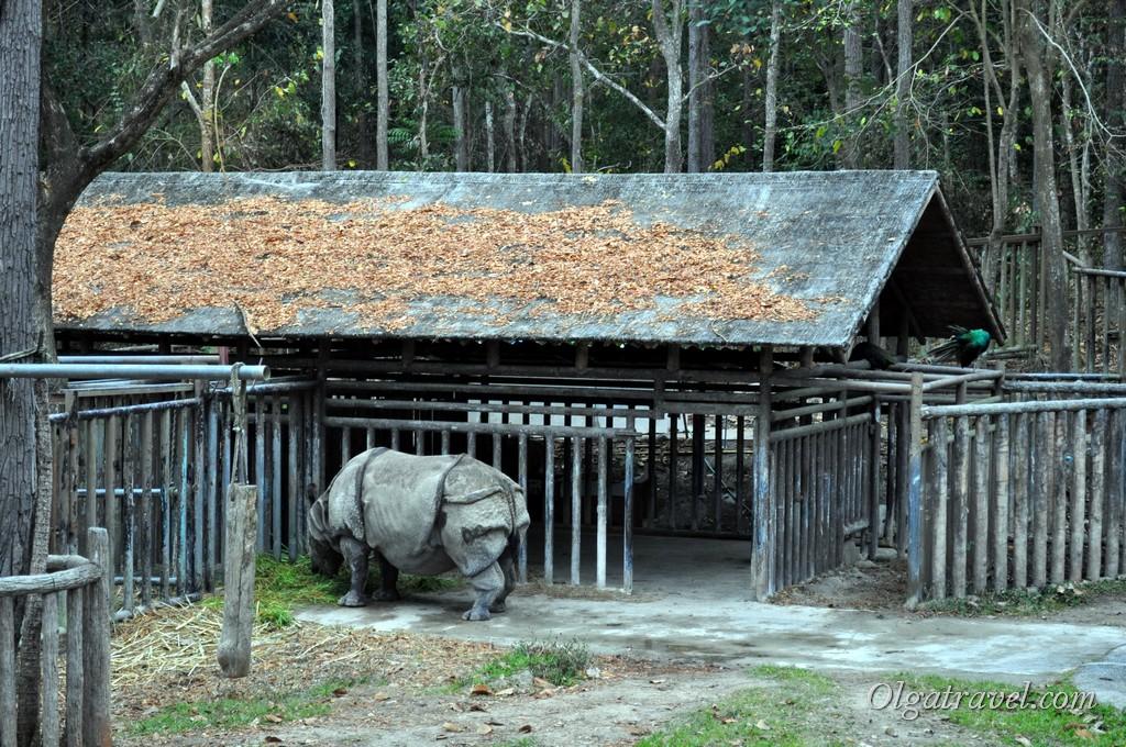 Chiangmai Zoo 37