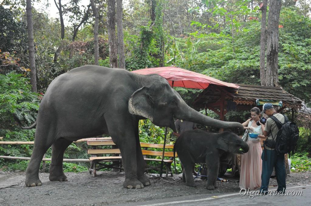 Chiangmai Zoo 38