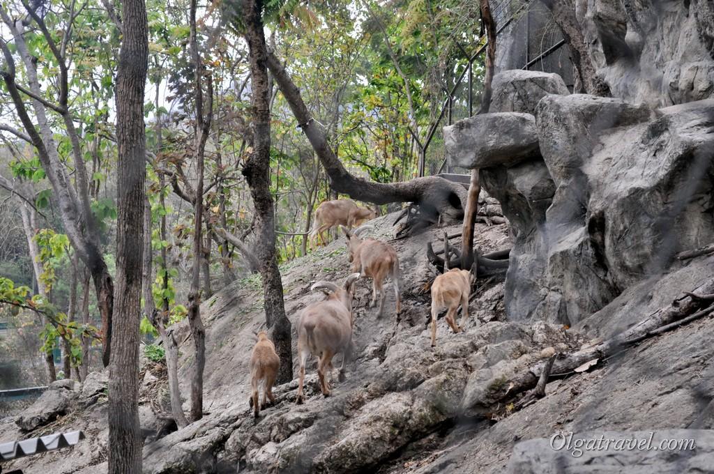 Chiangmai Zoo 42