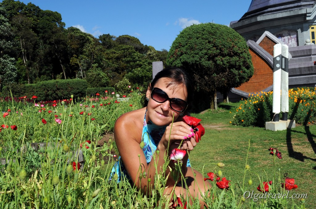Маки в Таиланде