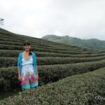 Мае Салонг —  китайская деревня с чайными плантациями на Севере Таиланда