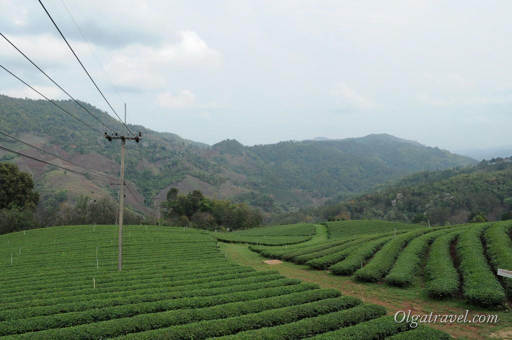 Чайные плантации Мае Салонг