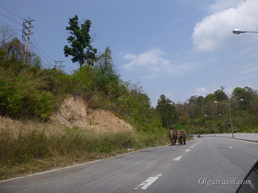 Pai-road-6