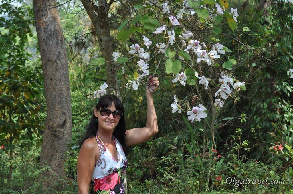Queen Sirikit Botanic garden 10