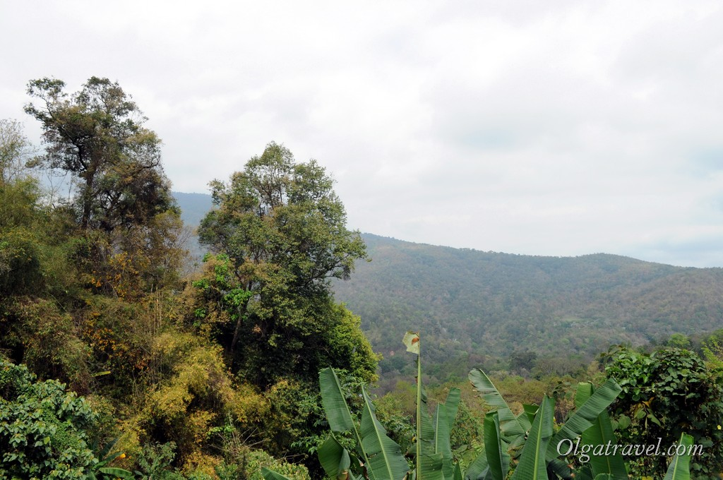 Queen Sirikit Botanic garden 18